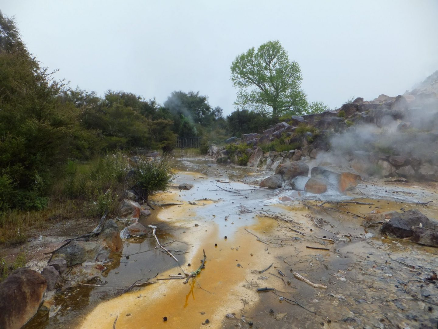 Maori Culture and Geothermal activity in Rotorua